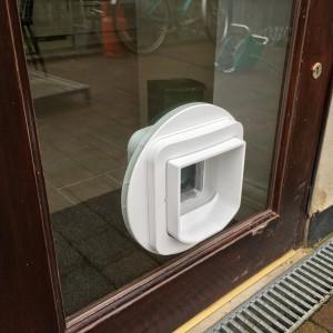 Cat-Flap in Door - New Malden KT3
